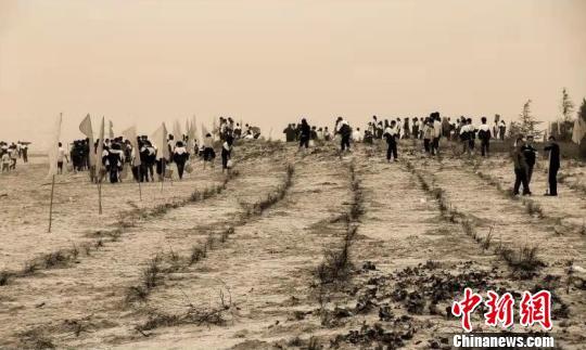 """广东沿海御风治沙2885公里防护林成""""生命带"""""""