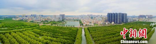 """广东茂名电白水东湾红树林是全国最大的连片人工红树林种植示范基地,形成了独特的""""海上森林""""景观。广东省林业局 供图"""