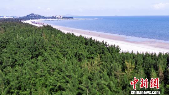 茂名电白博贺林带绿意盎然,茂密的树林一望无际。广东省林业局 供图