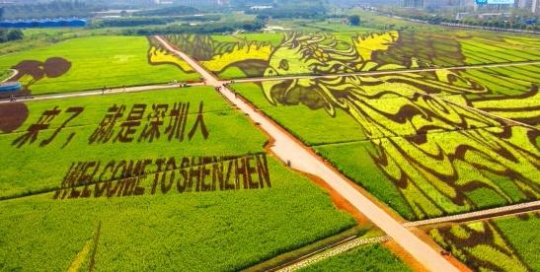 以大地艺术为国庆献礼,深圳光明小镇绿色发展业态显雏形