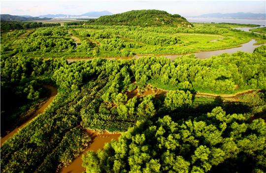 红树林湿地鸟瞰--2.JPG.jpg